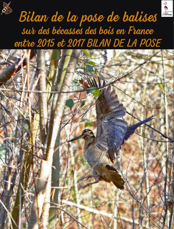 Bilan de la pose de balises sur des bécasses des bois en France entre 2015 et 2017