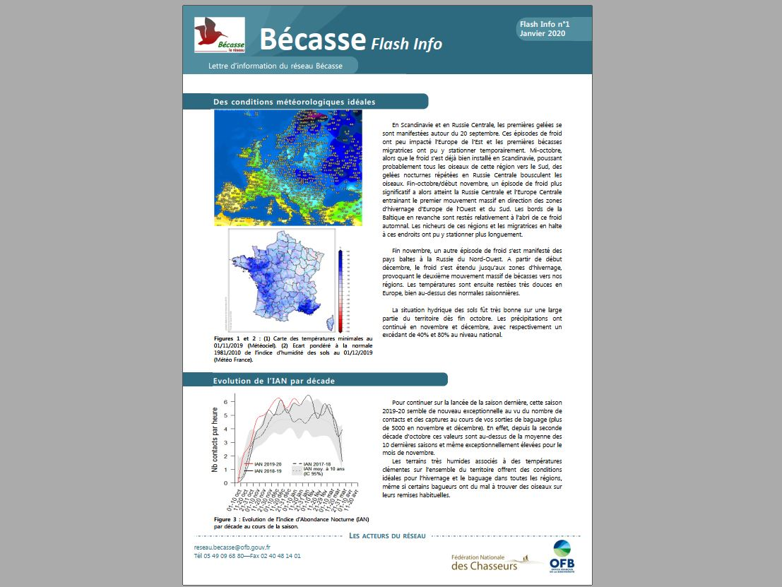 Flash Info n°1 du Réseau Bécasse – Janvier 2020