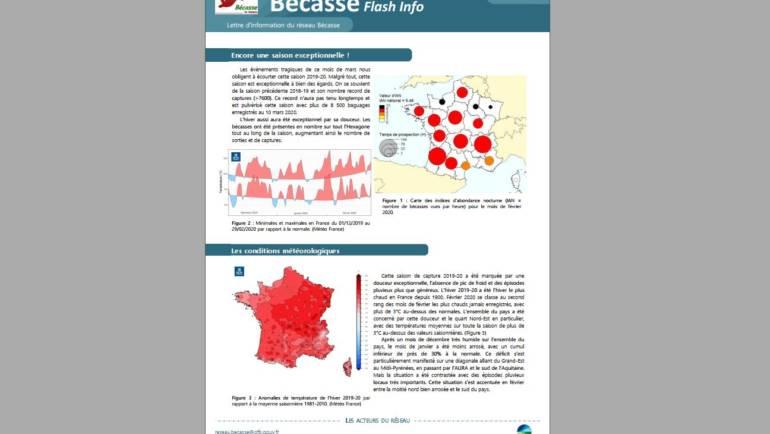 Flash Info n°2 du Réseau Bécasse – Mars 2020
