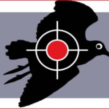 La chasse à la bécasse en sursis en Suisse